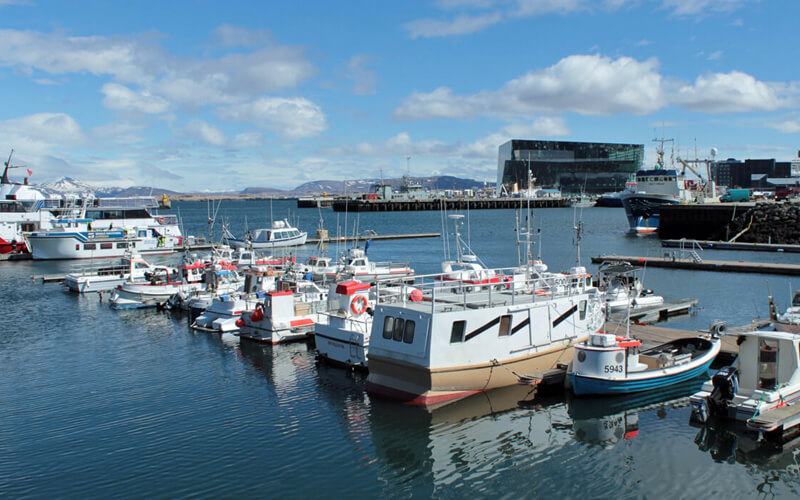 Reykjavik Harbour city break with kids